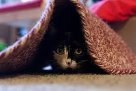 kitty hiding